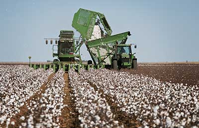 Cotton-Harvester